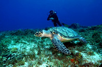 Diver and Hawksbill Turtle - Cozumel