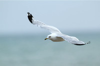 Stock RB Gull Flight 3937