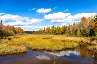 Autumn Bog and Fall Colors - Ontario, Canada