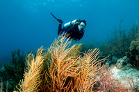 Scuba Diver and Forest of Gorgonians - Bonaire
