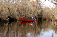 Canoeing in a Southern Swamp