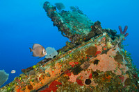 Tropical Fish and Coral Encrusted Shipwreck - Roatan, Honduras