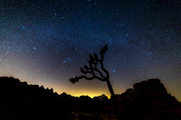 Night Sky Over Joshua Tree National Park, California